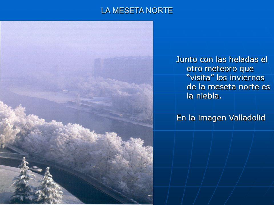 LA MESETA NORTE Junto con las heladas el otro meteoro que visita los inviernos de la meseta norte es la niebla.