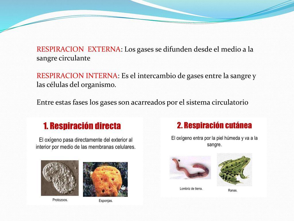 Único Respuestas Hoja Sistema Circulatorio Fotos - hojas de trabajo ...
