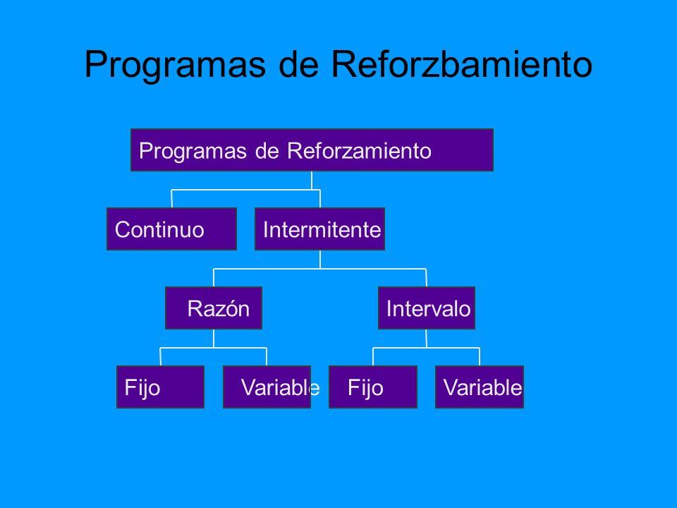 Programas de Reforzbamiento