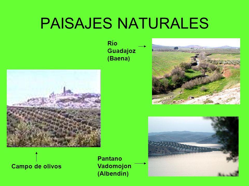 PAISAJES NATURALES Río Guadajoz (Baena) Campo de olivos