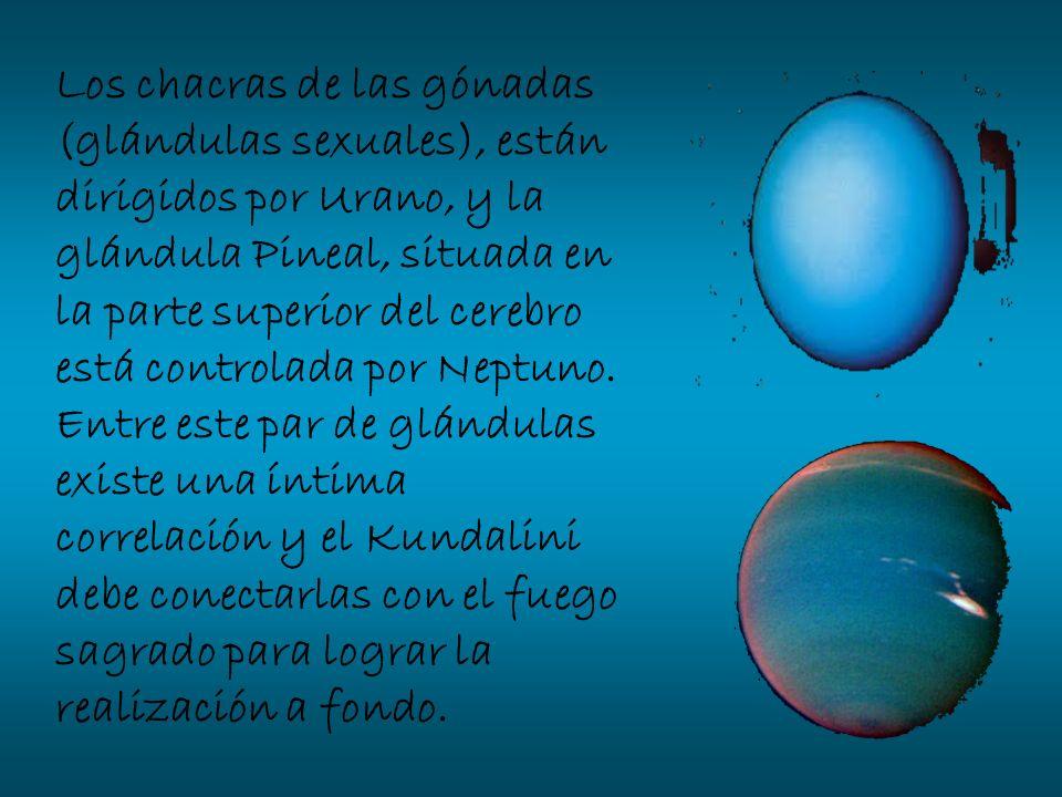 Los chacras de las gónadas (glándulas sexuales), están dirigidos por Urano, y la glándula Pineal, situada en la parte superior del cerebro está controlada por Neptuno.