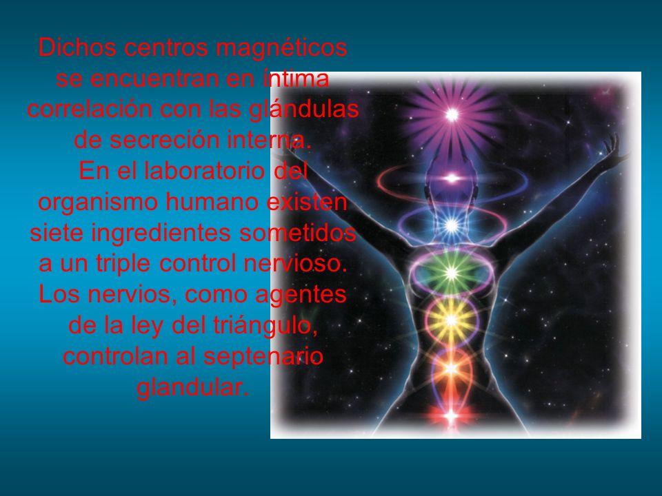 Dichos centros magnéticos se encuentran en íntima correlación con las glándulas de secreción interna.