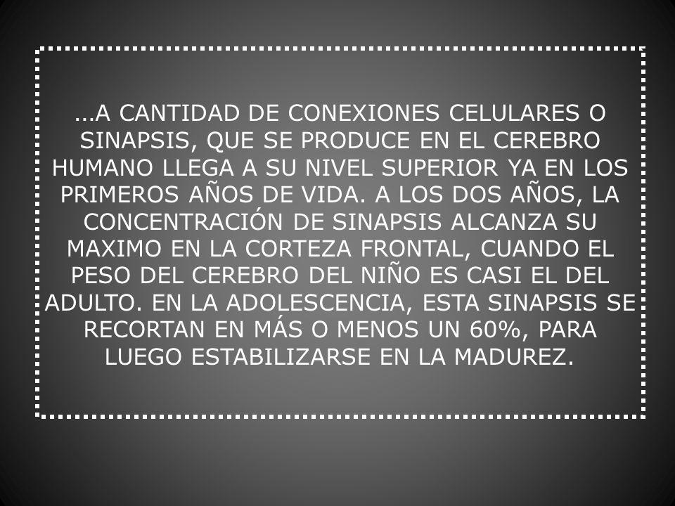 …A CANTIDAD DE CONEXIONES CELULARES O SINAPSIS, QUE SE PRODUCE EN EL CEREBRO HUMANO LLEGA A SU NIVEL SUPERIOR YA EN LOS PRIMEROS AÑOS DE VIDA.
