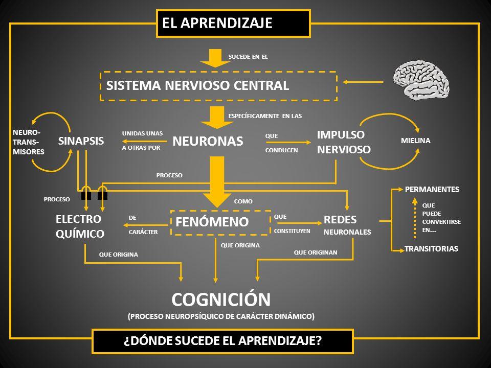 COGNICIÓN EL APRENDIZAJE SISTEMA NERVIOSO CENTRAL NEURONAS FENÓMENO