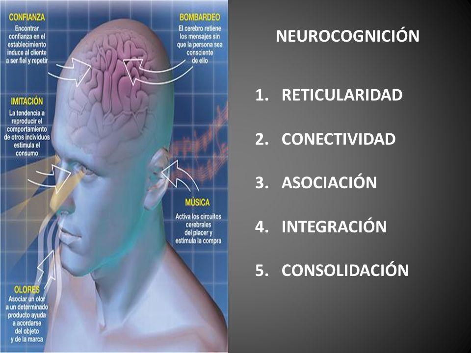 NEUROCOGNICIÓN RETICULARIDAD CONECTIVIDAD ASOCIACIÓN INTEGRACIÓN 5. CONSOLIDACIÓN