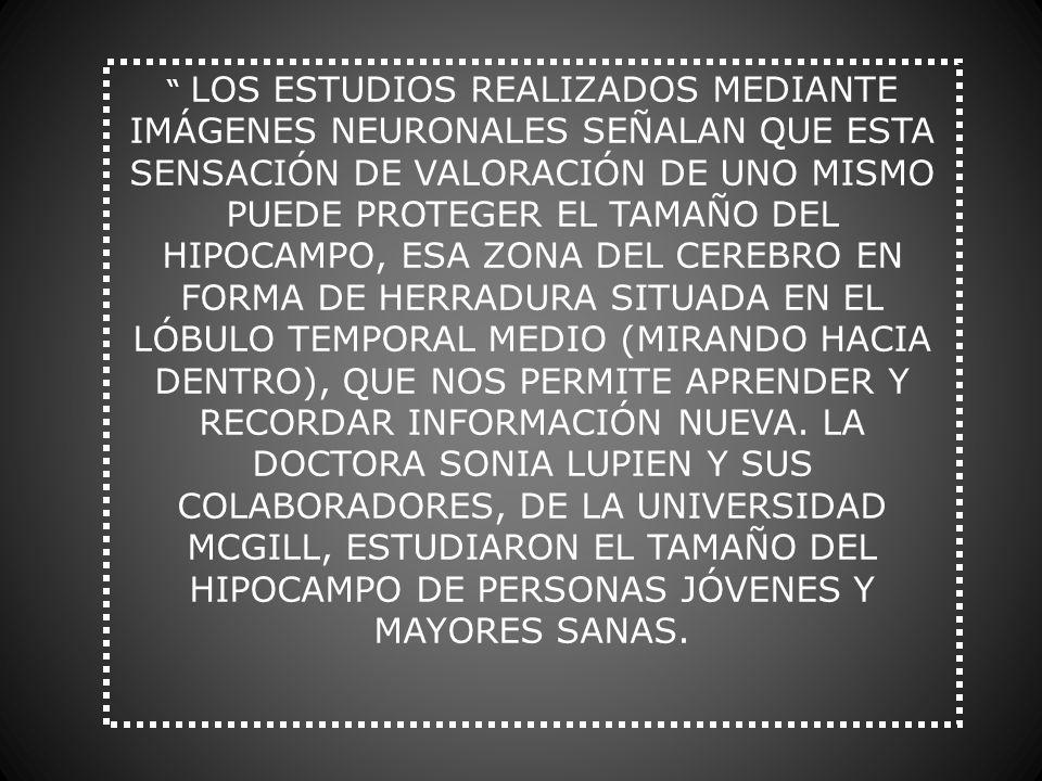LOS ESTUDIOS REALIZADOS MEDIANTE IMÁGENES NEURONALES SEÑALAN QUE ESTA SENSACIÓN DE VALORACIÓN DE UNO MISMO PUEDE PROTEGER EL TAMAÑO DEL HIPOCAMPO, ESA ZONA DEL CEREBRO EN FORMA DE HERRADURA SITUADA EN EL LÓBULO TEMPORAL MEDIO (MIRANDO HACIA DENTRO), QUE NOS PERMITE APRENDER Y RECORDAR INFORMACIÓN NUEVA.