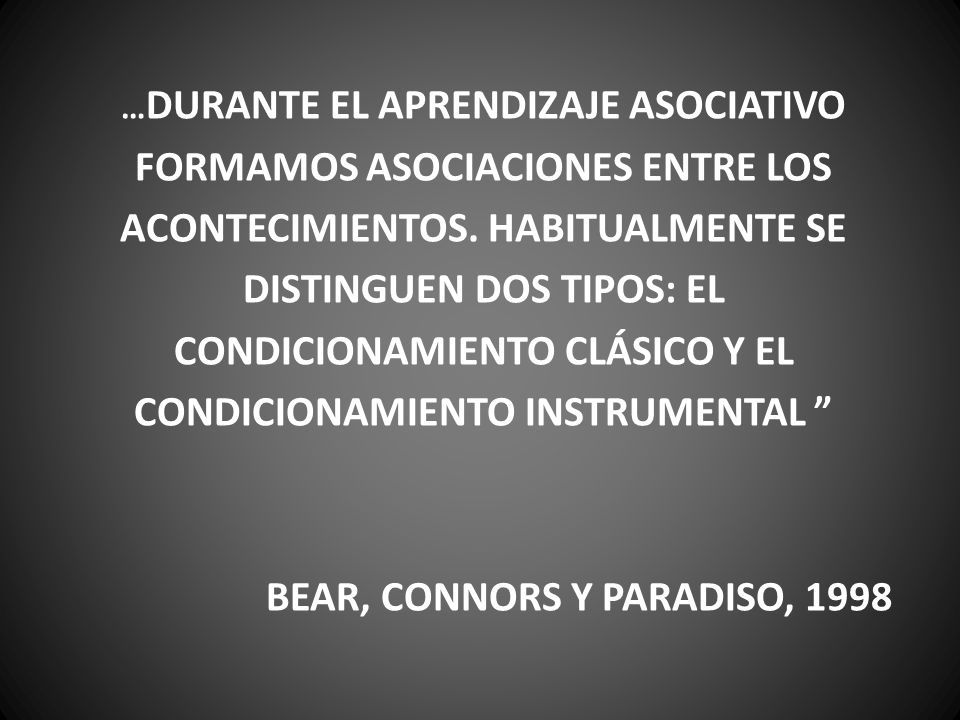 BEAR, CONNORS Y PARADISO, 1998