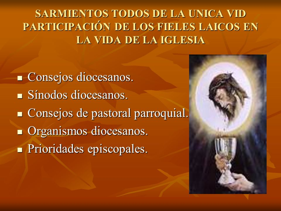 Consejos de pastoral parroquial. Organismos diocesanos.