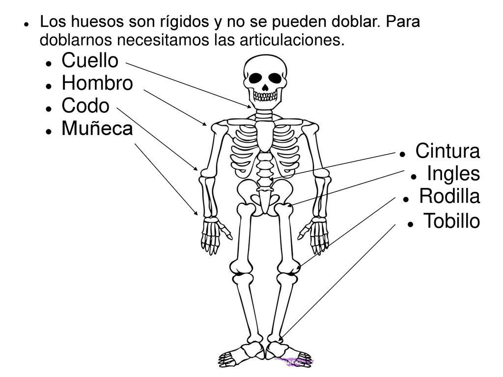 Famoso Anatomía Tobillo Mri Fotos - Anatomía de Las Imágenesdel ...