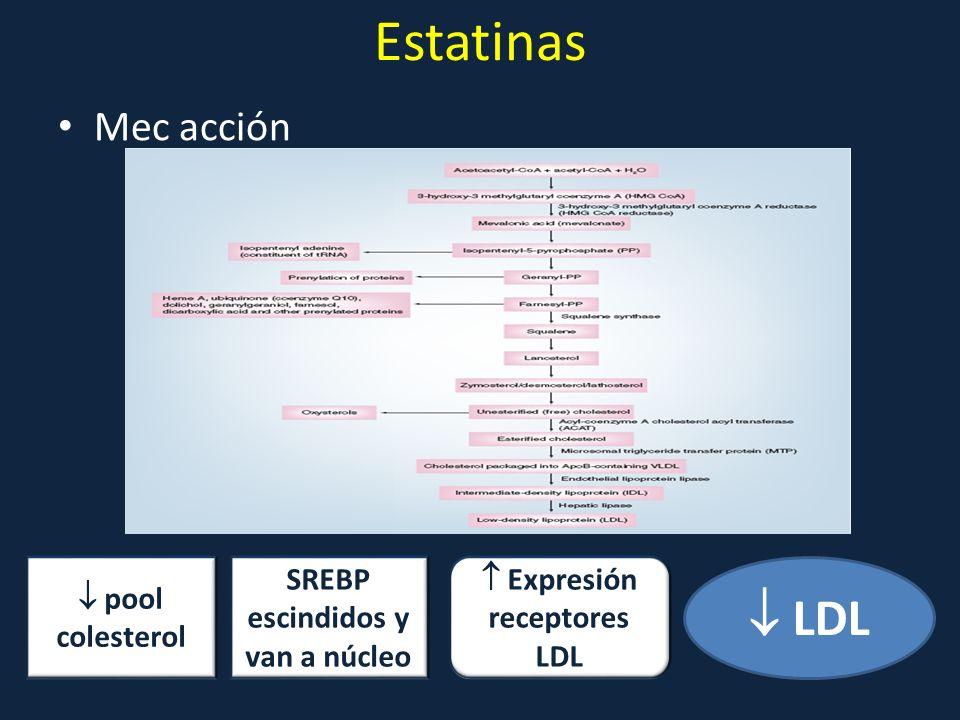 SREBP escindidos y van a núcleo  Expresión receptores LDL
