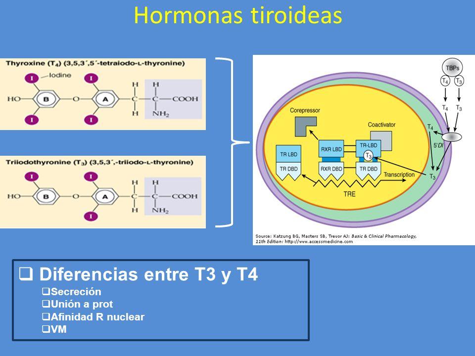 Hormonas tiroideas Diferencias entre T3 y T4 Secreción Unión a prot