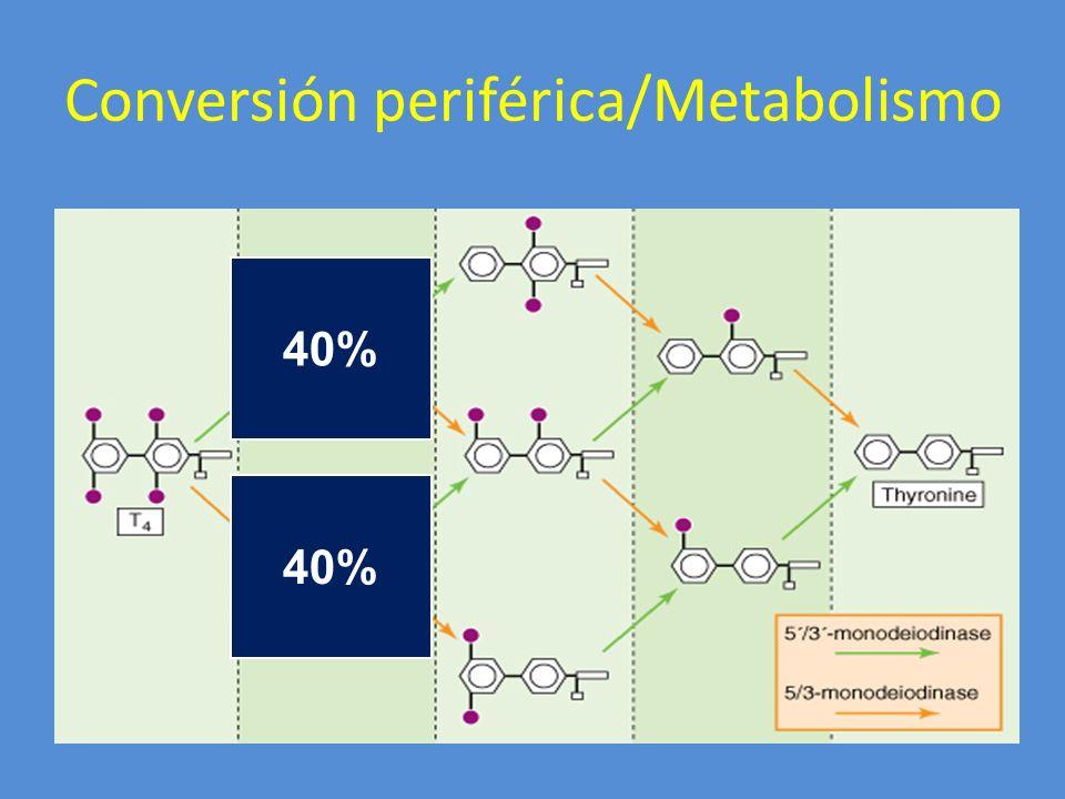 Conversión periférica/Metabolismo