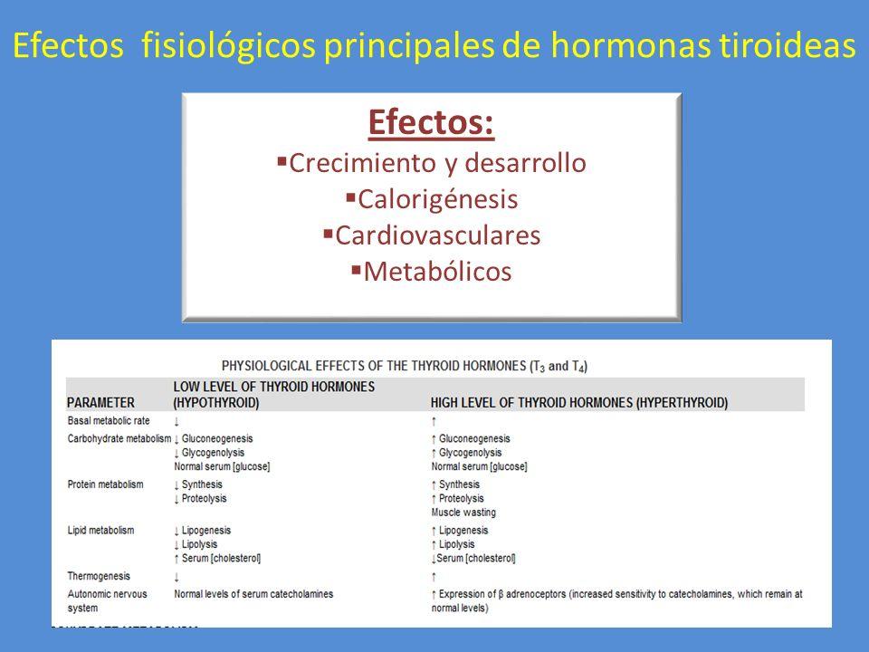 Efectos fisiológicos principales de hormonas tiroideas