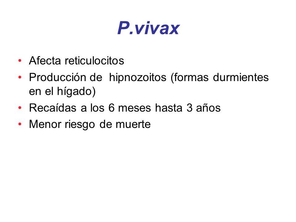 P.vivax Afecta reticulocitos