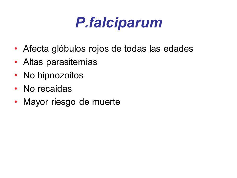 P.falciparum Afecta glóbulos rojos de todas las edades
