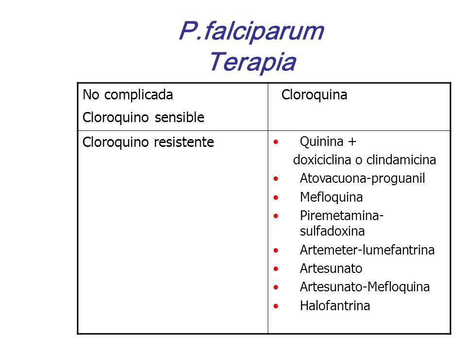 P.falciparum Terapia No complicada Cloroquino sensible Cloroquina