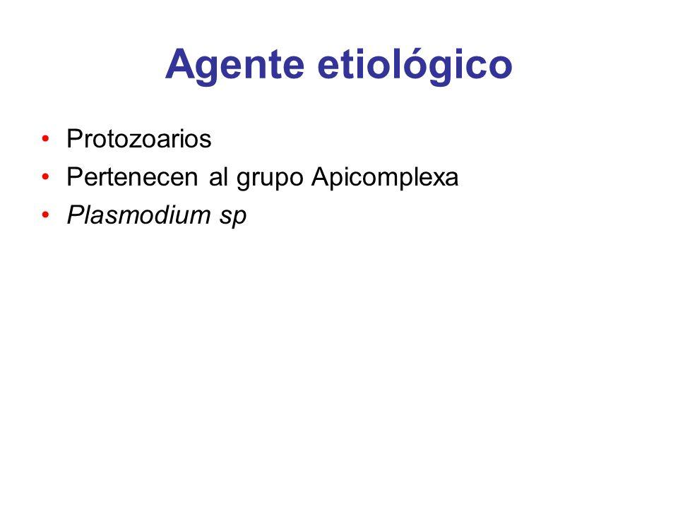 Agente etiológico Protozoarios Pertenecen al grupo Apicomplexa