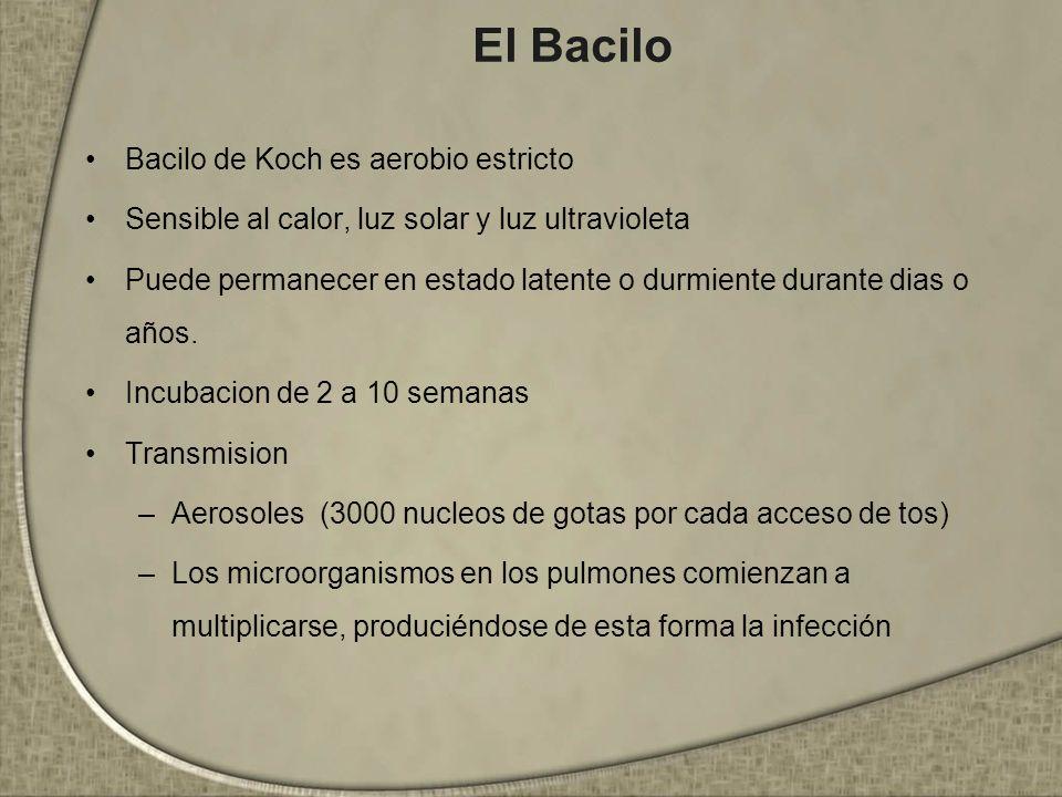 El Bacilo Bacilo de Koch es aerobio estricto