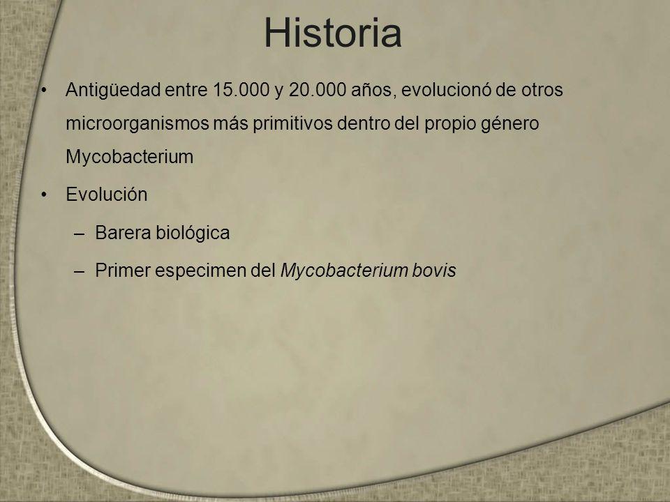 Historia Antigüedad entre 15.000 y 20.000 años, evolucionó de otros microorganismos más primitivos dentro del propio género Mycobacterium.