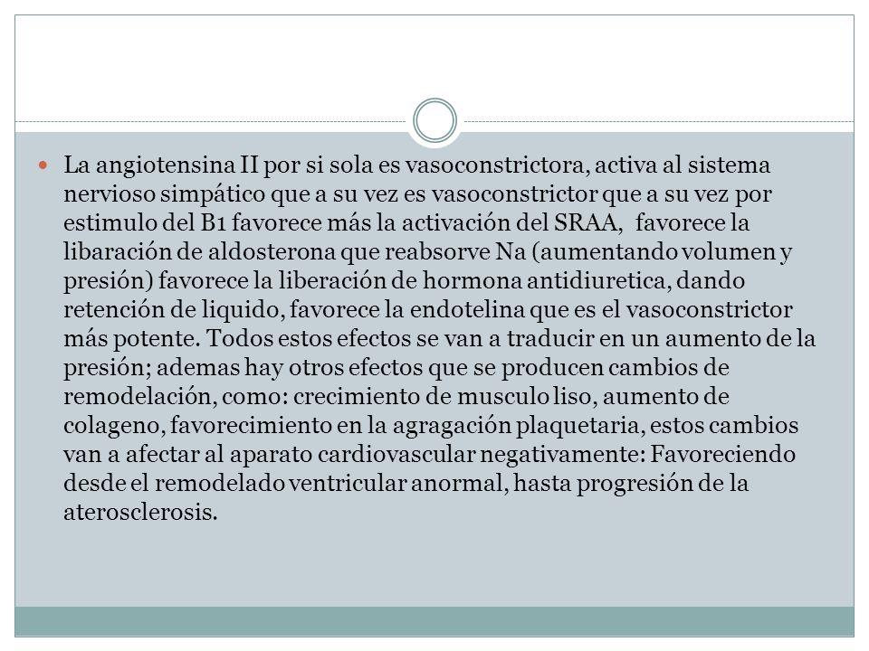 La angiotensina II por si sola es vasoconstrictora, activa al sistema nervioso simpático que a su vez es vasoconstrictor que a su vez por estimulo del B1 favorece más la activación del SRAA, favorece la libaración de aldosterona que reabsorve Na (aumentando volumen y presión) favorece la liberación de hormona antidiuretica, dando retención de liquido, favorece la endotelina que es el vasoconstrictor más potente.
