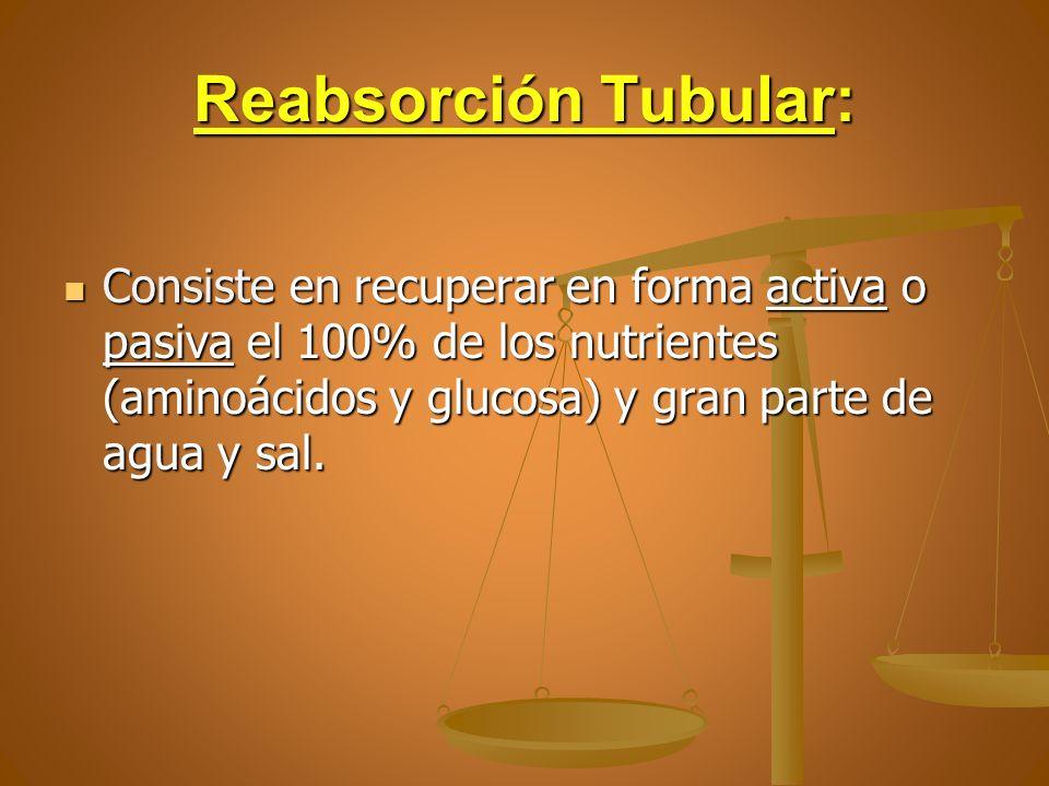 Reabsorción Tubular: Consiste en recuperar en forma activa o pasiva el 100% de los nutrientes (aminoácidos y glucosa) y gran parte de agua y sal.