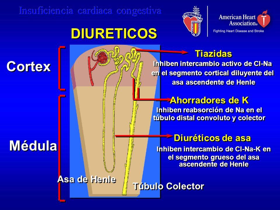DIURETICOS Cortex Médula Tiazidas Ahorradores de K Diuréticos de asa