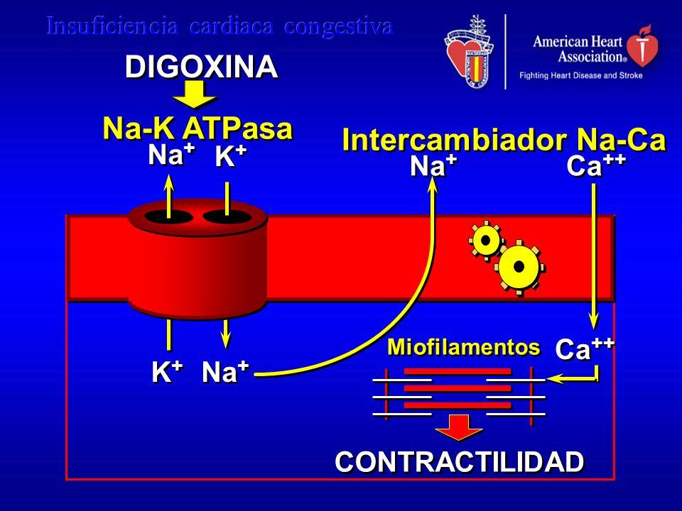 DIGOXINA Na-K ATPasa Intercambiador Na-Ca