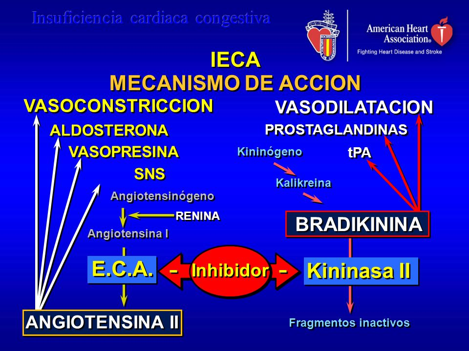 IECA MECANISMO DE ACCION E.C.A. Kininasa II