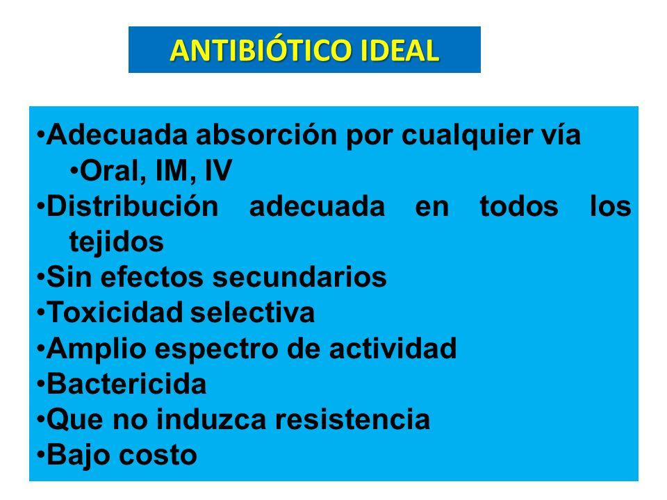 ANTIBIÓTICO IDEAL Adecuada absorción por cualquier vía Oral, IM, IV