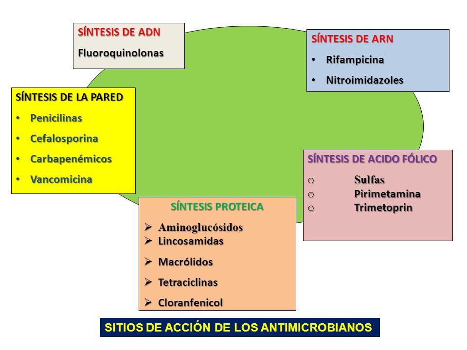 SÍNTESIS DE ADN Fluoroquinolonas. SÍNTESIS DE ARN. Rifampicina. Nitroimidazoles. SÍNTESIS DE LA PARED.