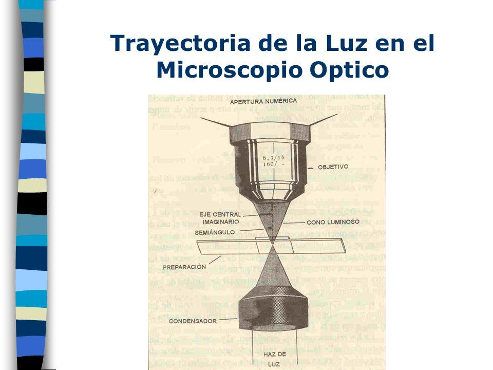 Trayectoria de la Luz en el Microscopio Optico