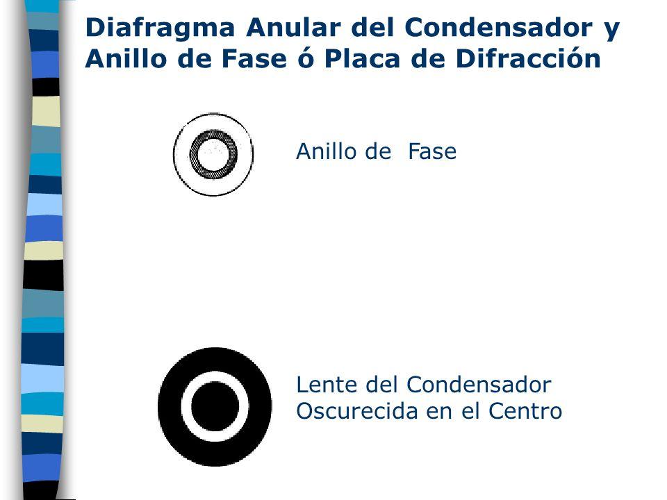 Diafragma Anular del Condensador y Anillo de Fase ó Placa de Difracción