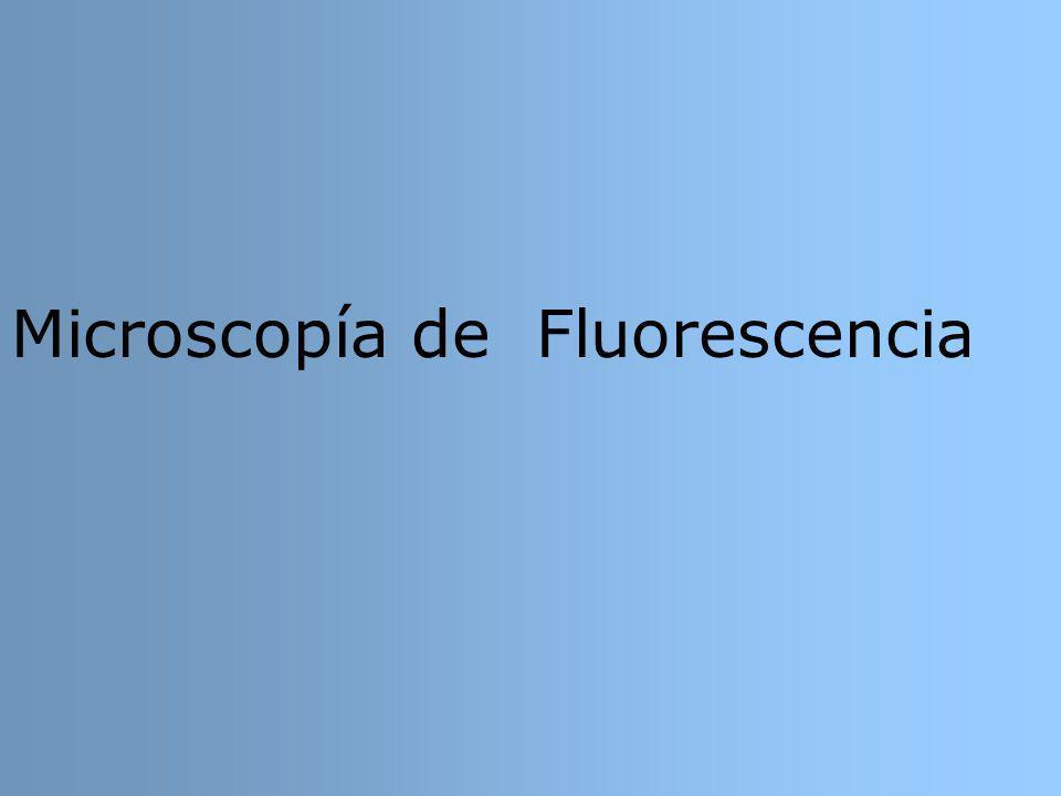 Microscopía de Fluorescencia