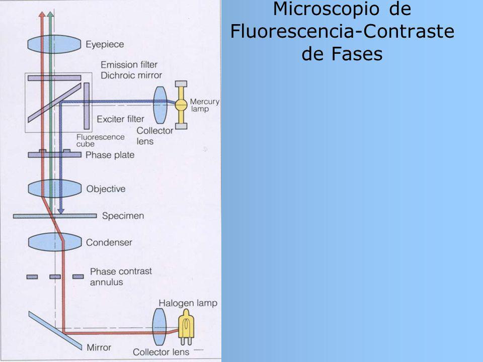 Microscopio de Fluorescencia-Contraste de Fases