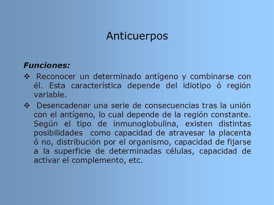 Anticuerpos Funciones: