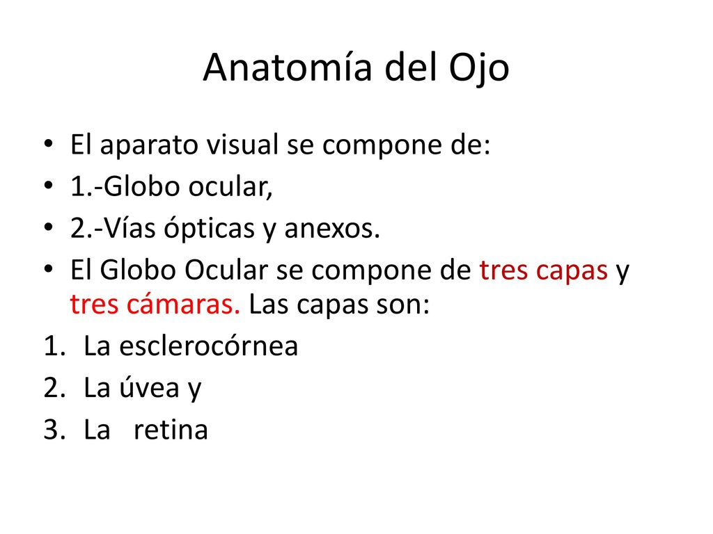 Increíble La Hoja De Ojo Y La Visión Anatomía Componente - Anatomía ...