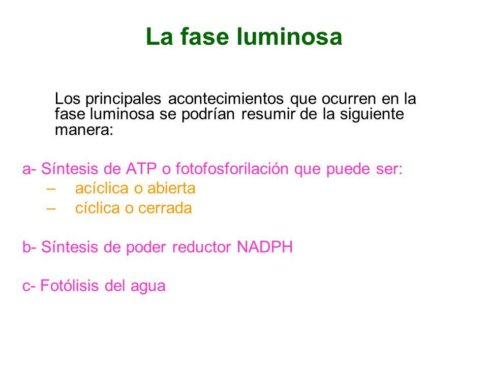 La fase luminosa a- Síntesis de ATP o fotofosforilación que puede ser: