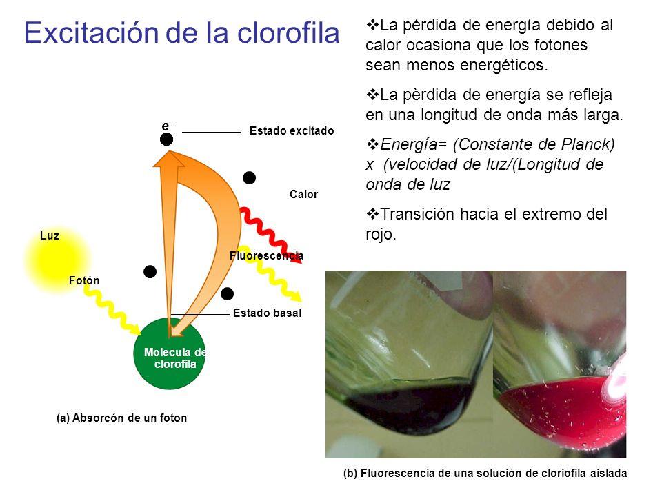 Excitación de la clorofila