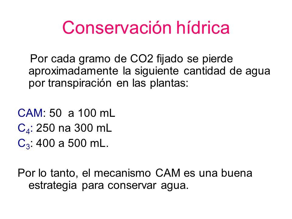 Conservación hídricaPor cada gramo de CO2 fijado se pierde aproximadamente la siguiente cantidad de agua por transpiración en las plantas: