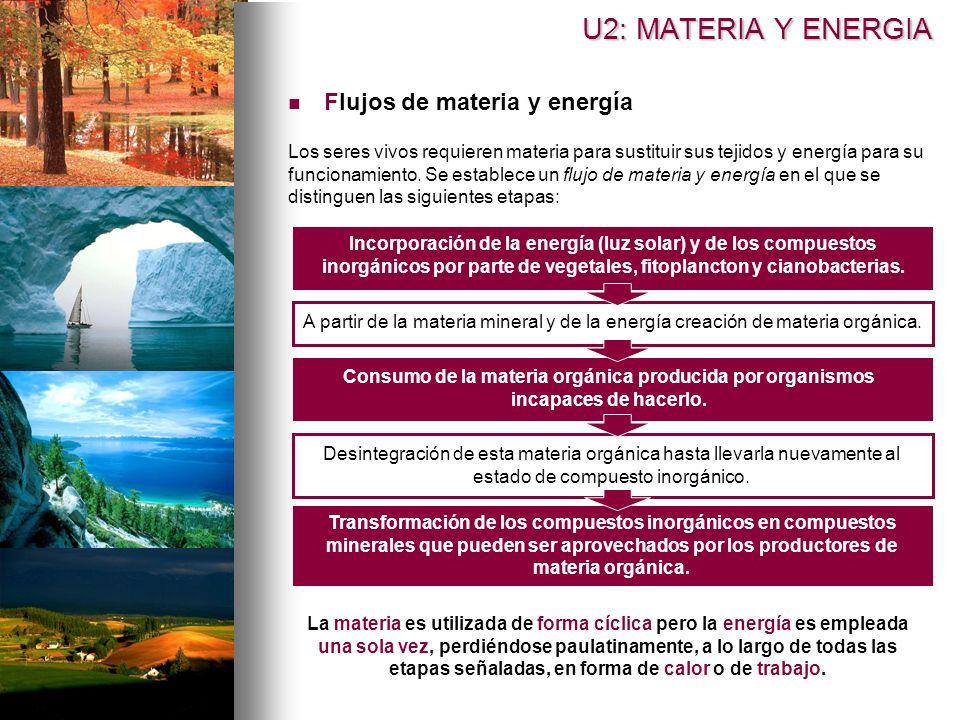 U2: MATERIA Y ENERGIA Flujos de materia y energía