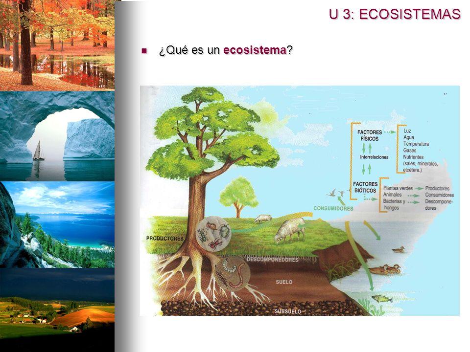 U 3: ECOSISTEMAS ¿Qué es un ecosistema