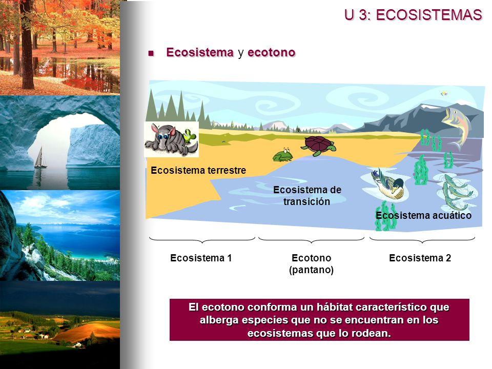 Ecosistema de transición