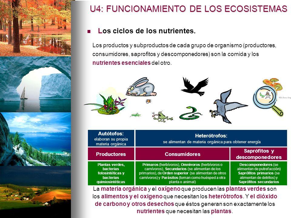 U4: FUNCIONAMIENTO DE LOS ECOSISTEMAS