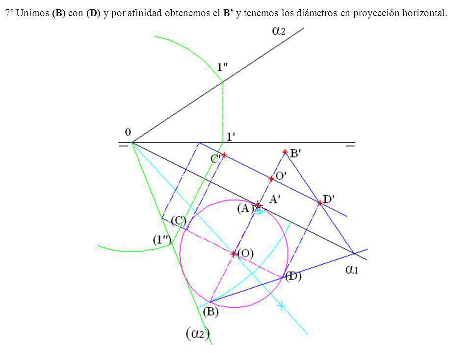 7º Unimos (B) con (D) y por afinidad obtenemos el B' y tenemos los diámetros en proyección horizontal.