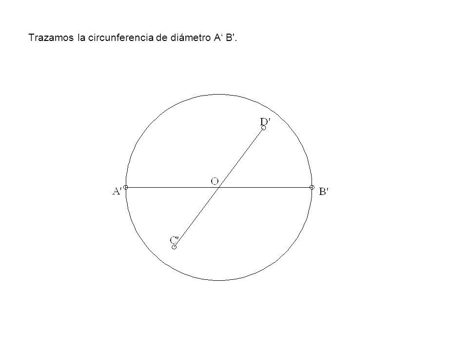 Trazamos la circunferencia de diámetro A' B .