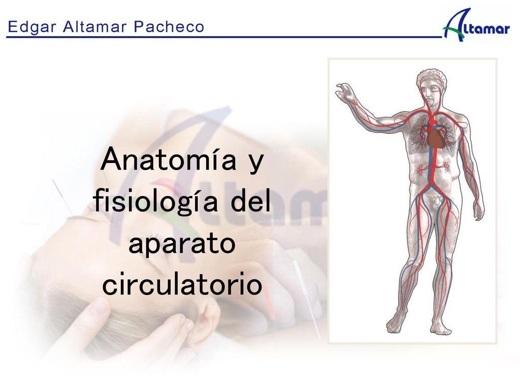 Moderno Vasos Sanguíneos Anatomía Y Fisiología Viñeta - Anatomía de ...