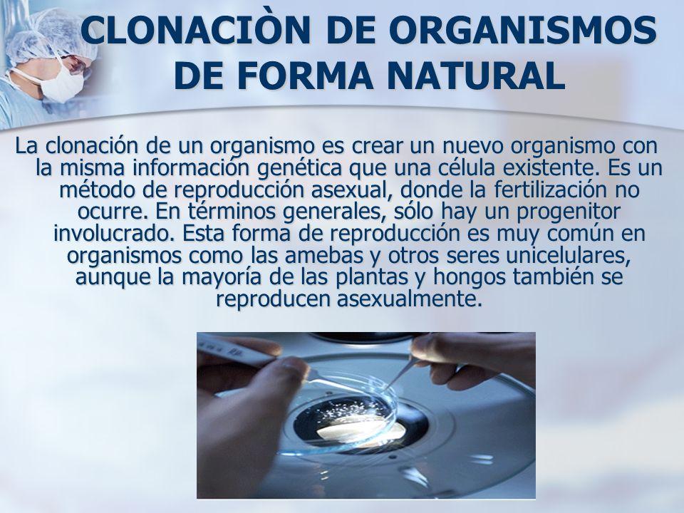 CLONACIÒN DE ORGANISMOS DE FORMA NATURAL