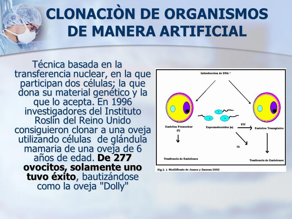 CLONACIÒN DE ORGANISMOS DE MANERA ARTIFICIAL