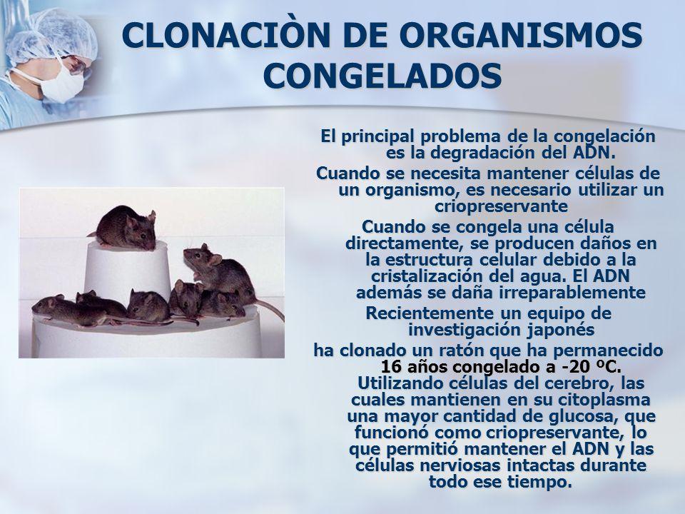 CLONACIÒN DE ORGANISMOS CONGELADOS