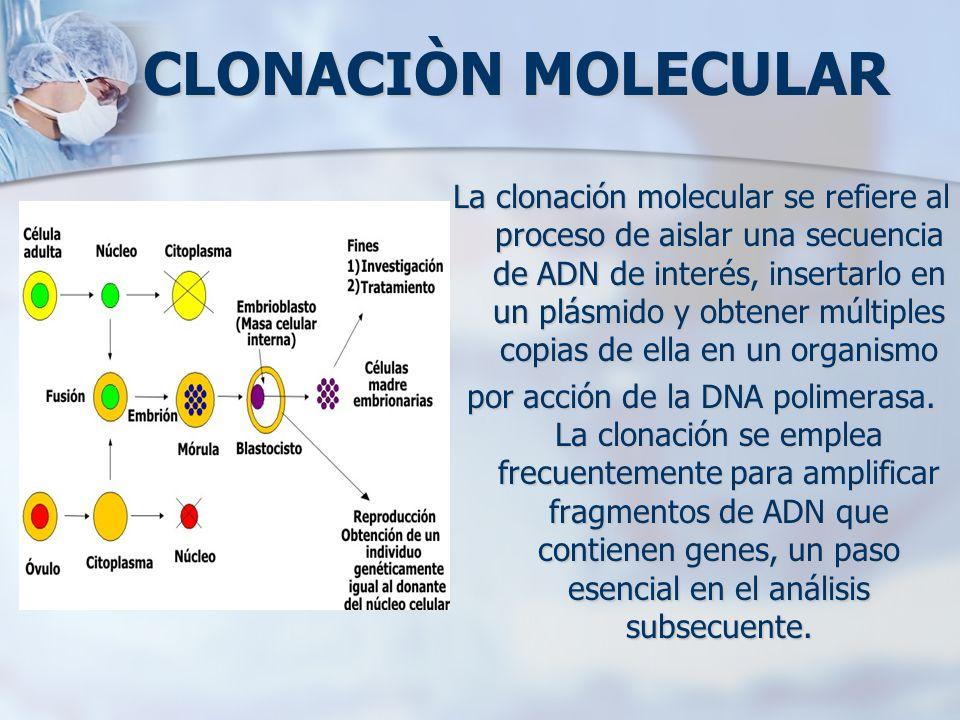 CLONACIÒN MOLECULAR